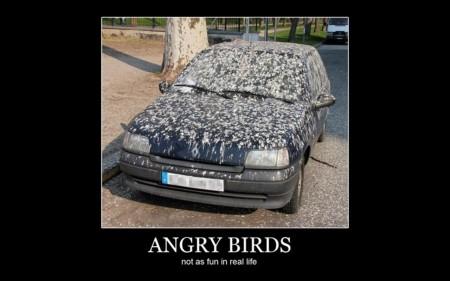 angry-birds-car-meme-hot-2139869492