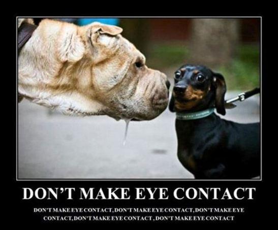 dont-make-eye-contact